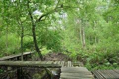 Długi drewno most w namorzynowym lesie fotografia royalty free