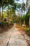 Długi drzewna linia iść naprzód Zdjęcie Royalty Free