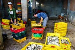 Długi Hai Wietnam, Dec, - 29, 2014: Osoby życie codzienne, wioska rybacka z mnóstwo ryba w połowu koszu przy tradycyjnym Obrazy Stock