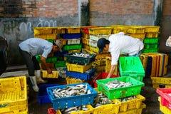 Długi Hai Wietnam, Dec, - 29, 2014: Osoby życie codzienne, wioska rybacka z mnóstwo ryba w połowu koszu przy tradycyjnym Zdjęcia Stock