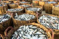 DŁUGI HAI, WIETNAM - 03 2016 LIPIEC: Świeże ryba na koszach dla sprzedaży w Długiej Hai plaży wprowadzać na rynek Obrazy Royalty Free