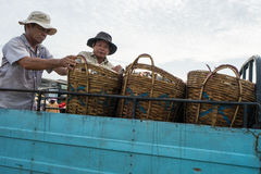 DŁUGI HAI, WIETNAM - 03 2016 LIPIEC: Świeże ryba na plastikowym koszu w Długim Hai połowu porcie Obrazy Royalty Free