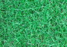 Długi liść zielonej trawy tekstury tło Zdjęcia Royalty Free