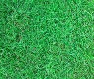 Długi liść zielonej trawy tekstury tło Zdjęcie Royalty Free