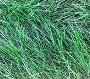 Długi liść zielonej trawy tekstury tło Fotografia Royalty Free