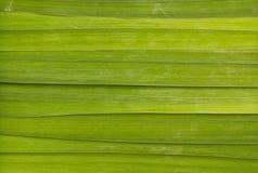 Długi liścia tło Obrazy Royalty Free