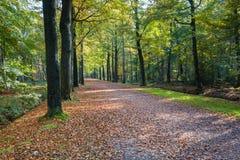 Długi pas ruchu w bukowym lesie w jesieni Zdjęcia Royalty Free
