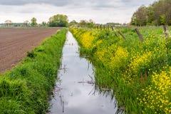 Długi prosty przykop z żółtym kwiatonośnym rapeseed przy przykopem Obraz Royalty Free