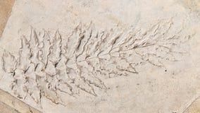 Długie liść rośliny Zdjęcia Stock