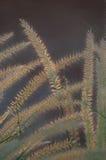 Długie traw słoma Zdjęcia Stock