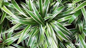 długiej zieleni liść Zdjęcia Stock