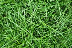Długiej zieleni skołtuniona trawa, tło Zdjęcie Stock