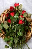 długo czerwonych róż łodygi Zdjęcie Royalty Free