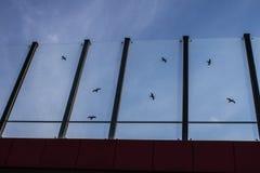 Dźwiękochłonny szkło ekran wzdłuż drogi w centrum miasta Czerń kontury ptaki na szkle Tło Zdjęcie Royalty Free