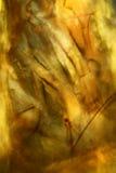 Dźwigowa komarnica rozdziela w kolorze żółtym złocie i, abstrakcjonistyczny micrograph Zdjęcie Stock