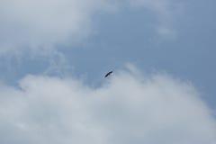 Dźwigowy latający nad niebieskiego nieba tłem daleko od Obrazy Royalty Free