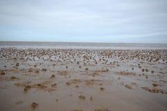 Dżdżownic obsady na Bridlington plaży obraz stock