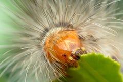 Dżdżownica, Caterpillar Obrazy Royalty Free