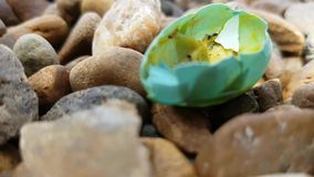 Dżdżownica powodować komarnicami Je płody ptaki w spadać jajkach na skałach zbiory