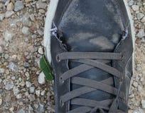 Dżdżownica w butach obrazy stock