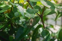 Dżdżownica w liściach zdjęcia royalty free