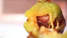 Dżdżownica w owoc je śliwki zdjęcie wideo
