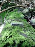 Dżdżownicy, podrożec w Tajlandia narodu parku Zdjęcie Stock