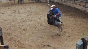 Dżokeja jeździecki struś zbiory wideo