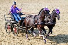 Dżokeje ściga się w rydwanie z dwa purebred koniami obraz royalty free