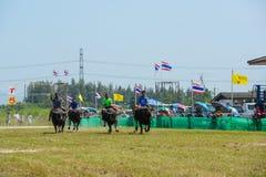 Dżokeje jedzie bizony biega w rocznym festiwalu zdjęcie royalty free