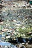 Dżonka odpady w Środkowym Bangkok na 19 2015 Czerwu Obraz Stock