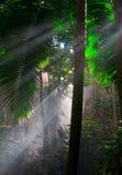 dżungla fotografia royalty free