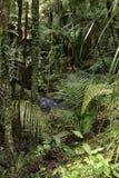 Dżungla Obrazy Royalty Free