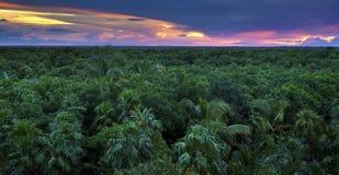Dżungla baldachim Zdjęcie Royalty Free