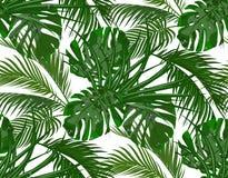 Dżungla Bujny zieleń liście tropikalni drzewka palmowe, monstera, agawy bezszwowy pojedynczy białe tło royalty ilustracja