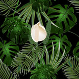 Dżungla Gąszcze tropikalni palmowi liście Kwiatu i potwora liście bezszwowy kwiecisty wzoru Odizolowywający na czerni ilustracji