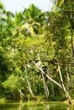 Dżungla Kerala stojące wody, łańcuch laguny i jeziora, Obraz Stock