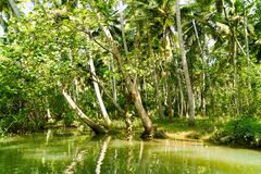 Dżungla Kerala stojące wody, łańcuch laguny i jeziora, Fotografia Royalty Free