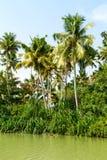 Dżungla Kerala stojące wody, łańcuch laguny i jeziora, Obrazy Stock