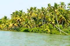 Dżungla Kerala stojące wody, łańcuch laguny i jeziora, Fotografia Stock