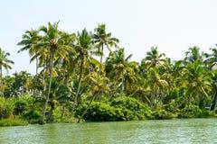 Dżungla Kerala stojące wody, łańcuch laguny i jeziora, Zdjęcia Stock