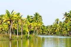 Dżungla Kerala stojące wody, łańcuch laguny i jeziora, Obrazy Royalty Free