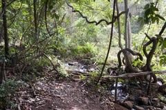 Dżungla krajobraz z ścieżką i zatoczką obrazy stock