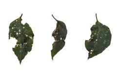 Dżungla liścia bielu tło Obraz Stock