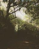 Dżungla mężczyzna Zdjęcia Royalty Free