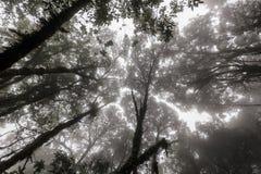 dżungla mglista fotografia royalty free