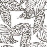 Dżungla opuszcza bezszwowego wektorowego kwiecistego deseniowego tło Tropikalna palma opuszcza tło Wektorowa ilustracja w modnym Zdjęcia Stock