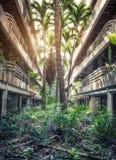 Dżungla przerastający budynki fotografia royalty free