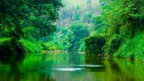 Dżungla przy Chiang Mai Obraz Stock