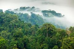Dżungla ranku mgła fotografia stock